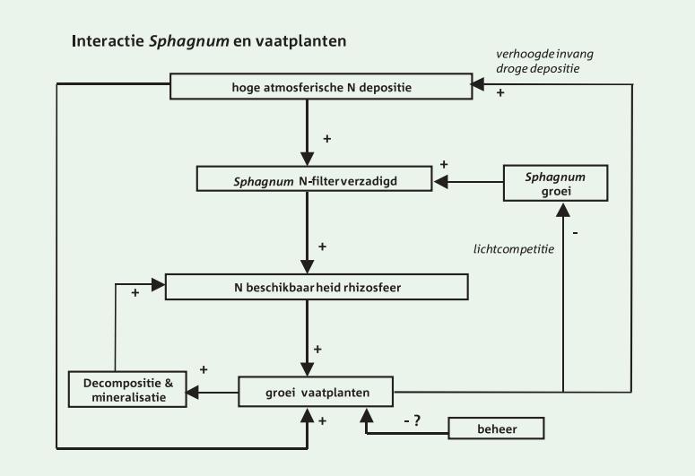 sphagnum en vaatplanten